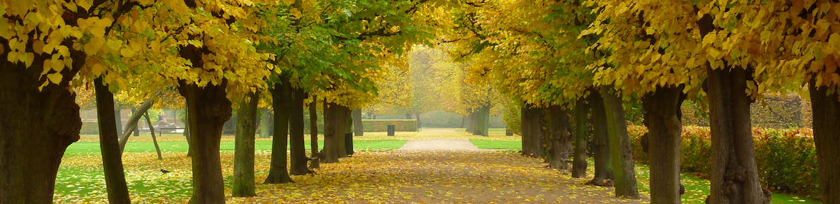 efterårs parkvejLcut